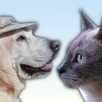 CAT AND LABRADOR