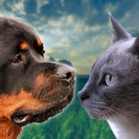 CAT AND ROTTWEILER